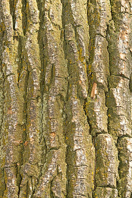 Photograph - Tree Bark Texture Vertical by James BO Insogna