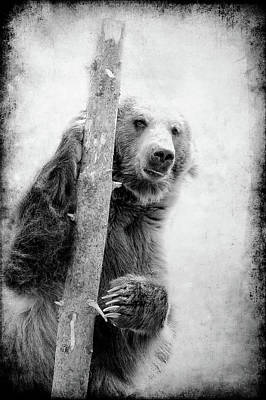 Photograph - Tree Bear by Athena Mckinzie