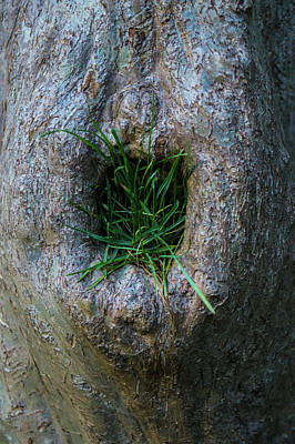 Outoors Photograph - Tree Bellybutton Lint by Craig David Morrison