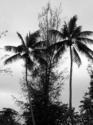 Photograph - Tree Between The Trees by Deborah  Crew-Johnson