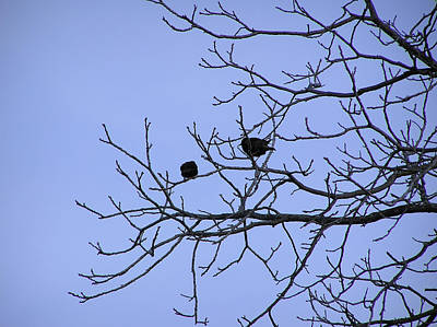 Photograph - Tree Birds And Sky by Richard Mitchell