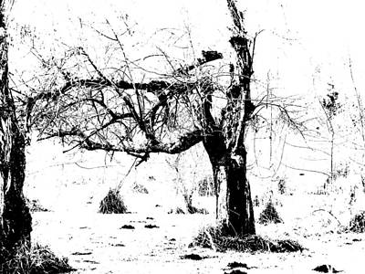 Photograph - Tree - Black And White by Marie Jamieson