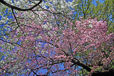 Photograph - Colorful Tree Blooms by Cora Wandel