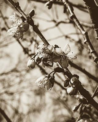 Photograph - Tree Blossom B by Jacek Wojnarowski