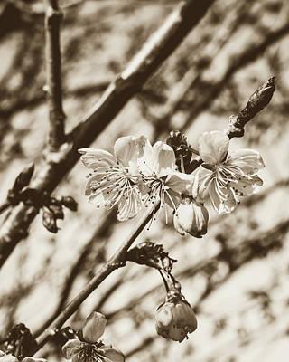 Photograph - Tree Blossom C by Jacek Wojnarowski