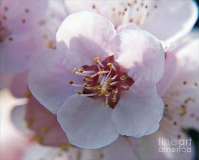 Art Print featuring the photograph Tree Blossoms by Elvira Ladocki
