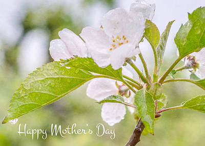 Photograph - Mother's Day Tree Blossoms  by Cathie Richardson