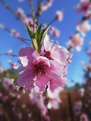 Photograph - Tree Blossoms  by Irina Sztukowski