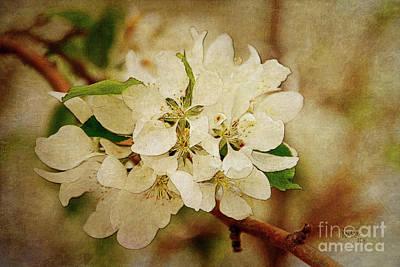 Digital Art - Tree Blossoms by Krista-