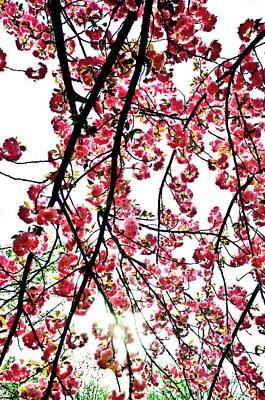 Photograph - Tree Blossoms by Scott Sawyer