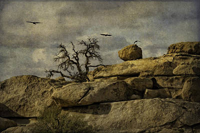 Photograph - Tree Bones And Ravens by Sandra Selle Rodriguez