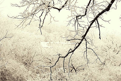 Photograph - Tree Branch. Gentle Winter by Jenny Rainbow