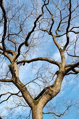 Photograph - Tree Branches by Elenarts - Elena Duvernay photo
