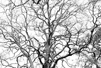 Tree Branches Art Print by Gaspar Avila