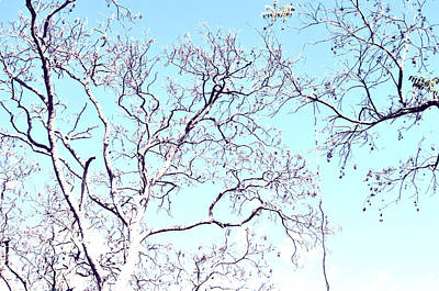 Photograph - Tree Branches Reaching For Heaven 2 by Patricia Awapara