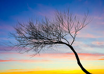Tree Branches Art Print by Svetlana Sewell