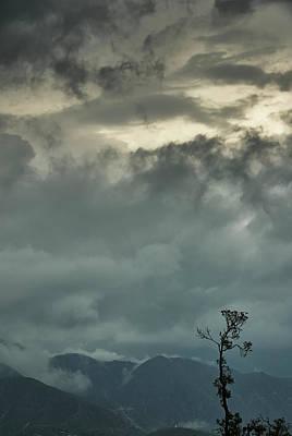 Photograph - Tree. Bright Light by Rajiv Chopra