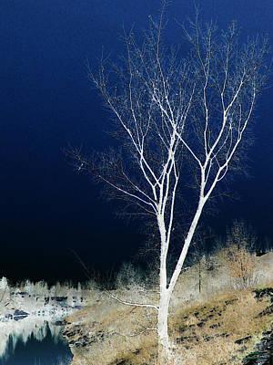 Tree By Stream Art Print by Stuart Turnbull