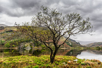 Tree By The Lake Art Print by Adrian Evans