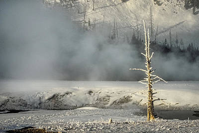 Photograph - Tree By The Thermal - Yellowstone by Stuart Litoff