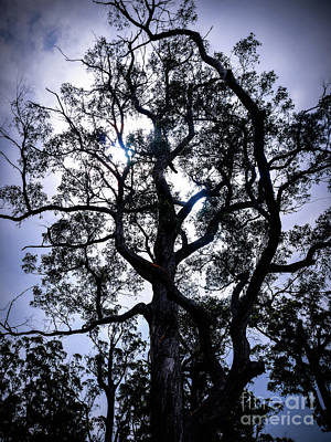 Photograph - Tree By Twilight by Lexa Harpell
