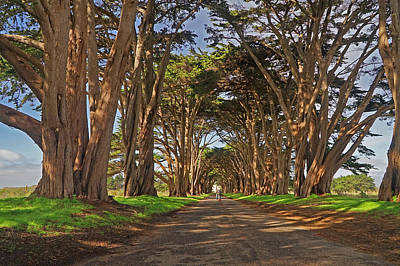 California Photograph - Tree Canopy by April Bielefeldt