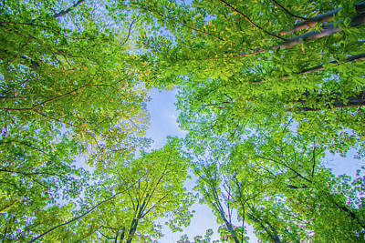 Photograph - Tree Canopy by Jonny D