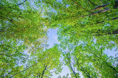 Photograph - Tree Canopy by Jonny D