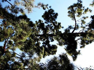 Tree Canopy Art Print by Karen Sydney
