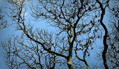 Outdoor Graphic Tees - Tree by Chidananda Babu