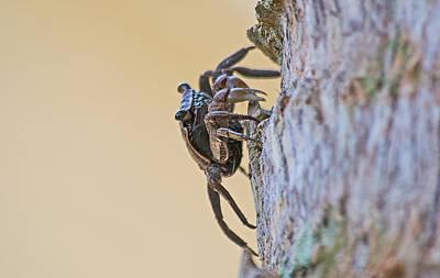 Tree Climbing Crab Art Print