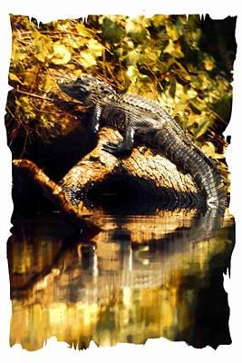 Photograph - Tree Climbing Gator by Sheri McLeroy