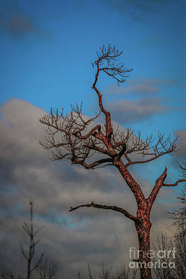 Photograph - Tree, Clouds, Blue Sky by Tom Claud