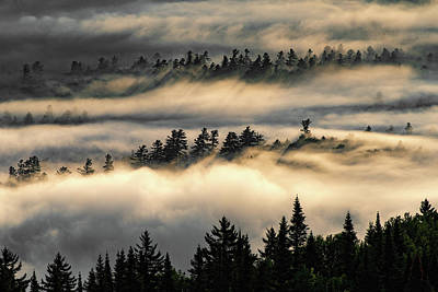Photograph - Trees In The Clouds by Brad Wenskoski