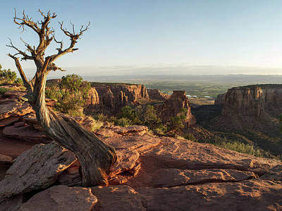 Photograph - Tree - Colorado National Monument by Aaron Spong