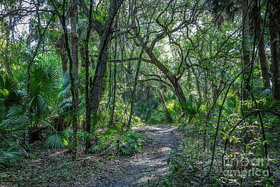 Photograph - Tree Covered Trail by Tom Claud