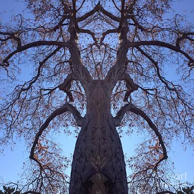 Photograph - Tree Creature by Nora Boghossian
