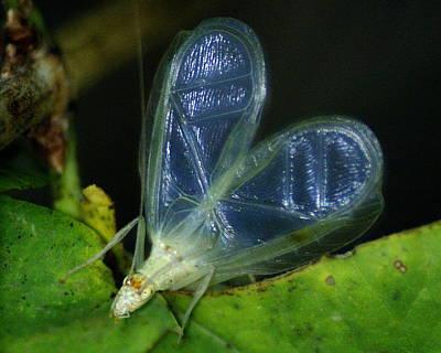 Photograph - Tree Cricket by Ben Upham III