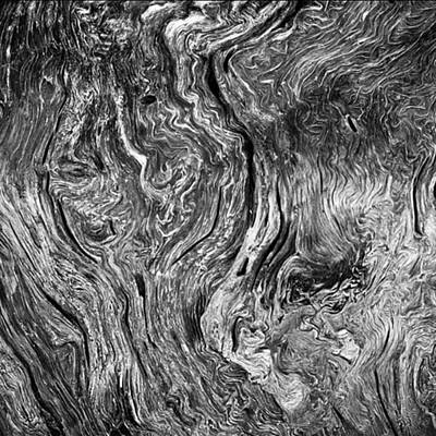 Fineart Photograph - Tree Cross Section Abstract. Taken In by Alex Snay