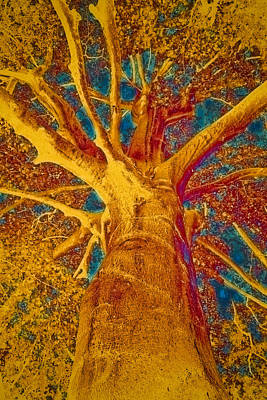 Painted Image Painting - Tree Crown by Frank Tschakert