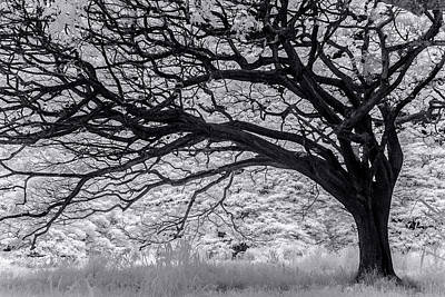 Of In A Frame Photograph - Tree Curl by Sean Davey