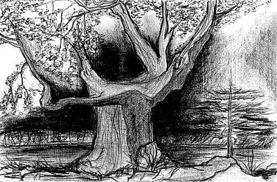 Drawing - Tree Dark Background by Matt Harang