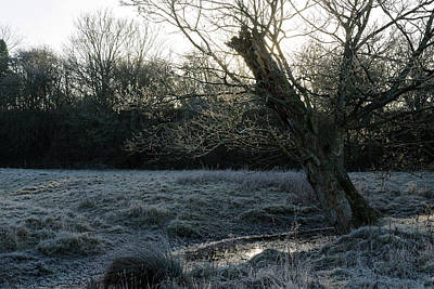 Photograph - Tree by David Harding