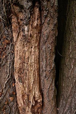 Rusty Trucks - Tree Decay by Keith Elliott