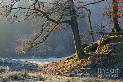 Mighty Oak Photograph - Tree Details, Elterwater by Tony Higginson