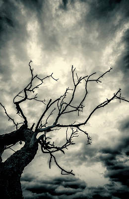 Photograph - Tree Doom by John Williams