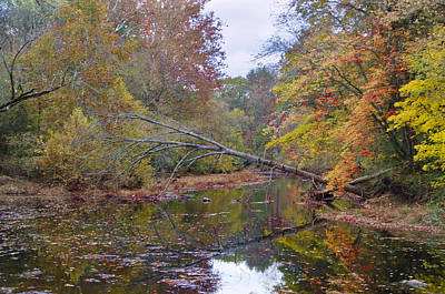 Tree Down Over Skippack Creek Art Print by Bill Cannon