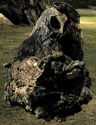 Photograph - Tree Dragon  by Chris Mercer