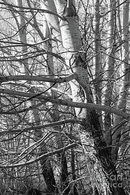 Photograph - Tree Drama In Black And White by Carol Groenen