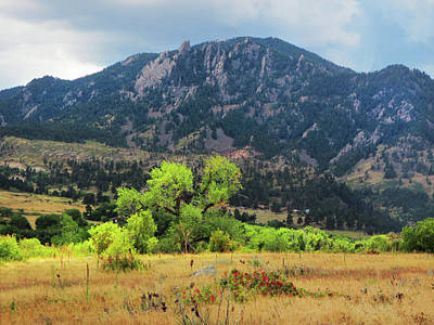 Boulder County Photograph - Tree Drama by Marilyn Hunt